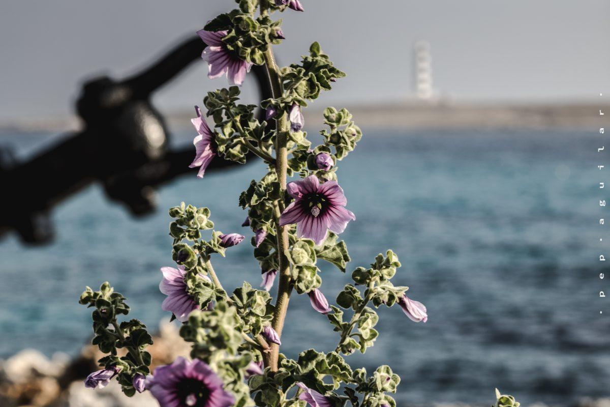 Recorriendo los 7 faros de Menorca por Pep Aguilar (6ª parte)
